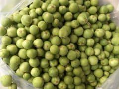 Pea Aubergine: A Seasonal Secret Ingredient Used in South India