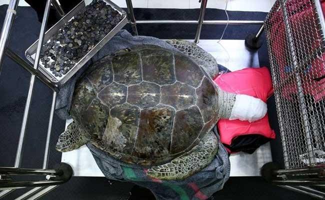piggy bank turtle