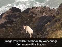 अविश्वसनीय: पहाड़ से 40 फुट नीचे नदी में गिरी गर्भवती गाय, बाल भी बांका न हुआ