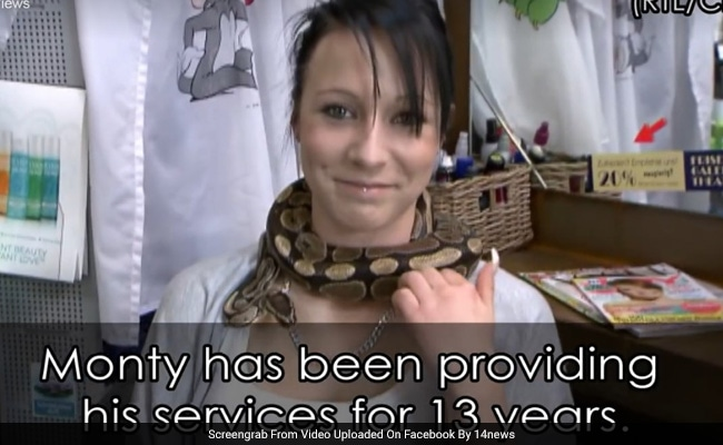 A Relaxing Massage... From A Snake. Are You Brave Enough For This Salon?
