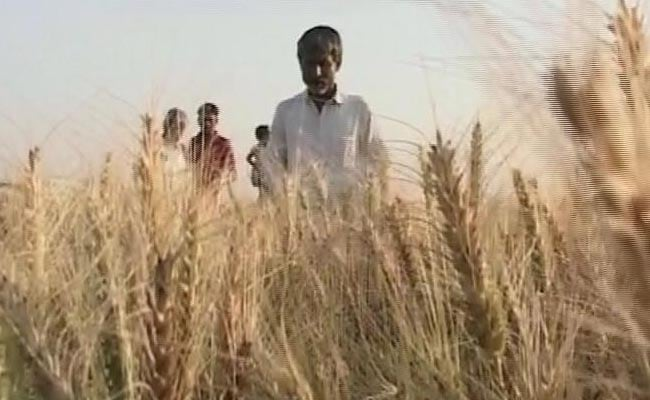 Government Considering Imposing Import Duty On Wheat