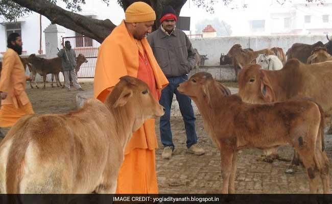 मखमली गद्दों पर नहीं बिना AC के तख्त पर सोएंगे योगी आदित्यनाथ, गाय भी पहुंचेंगी सीएम आवास, ऐसे करते हैं दिन की शुरुआत