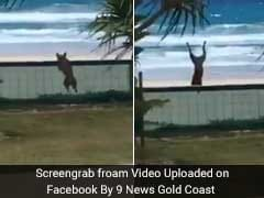 6 Million Views For Overexcited Dog Somersaulting Right Over A Fence