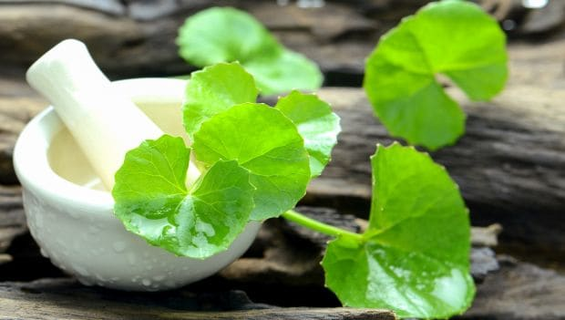 8 Impressive Benefits of Brahmi: The Medicinal Ayurvedic Herb ...