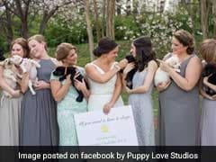 At This Paw-Some Wedding, Bridesmaids Carried Puppies Instead Of Bouquets
