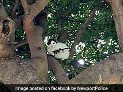 जब बिल्ली ने हाथों में थामी राइफल, पुलिस के हाथ-पांव फूले...!
