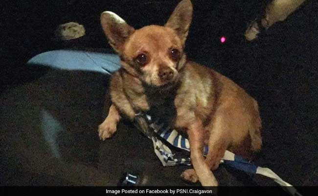 Dog With 'Anger Issues' Arrested For Jaywalking And Assault