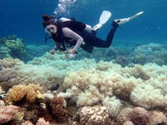 Australia Struggles To Conserve Its Great Barrier Reef