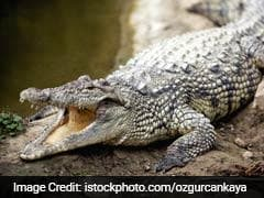 Man Lucky To Escape Crocodile's Clutches In Australia