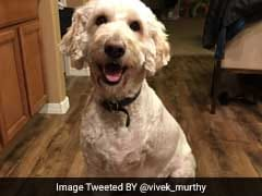 Three-Legged Dog Beats Cancer And Dogs Of Twitter Celebrate With Him