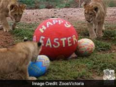 Zoo Organises Easter Celebrations For Animals, Video Will Make Your Day