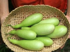 Indian Summer Gourds and What Makes Them Unique
