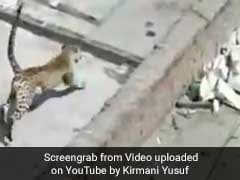Caught On Camera: Leopard Strays Into Gurgaon Home, 3-Hour Chase