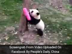 This Broom-Wielding Panda Is The Cutest Thing You'll See Today