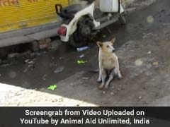 Paralysed Street Dog In Udaipur Walks Again. Video Will Warm Your Heart