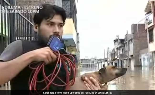 Watch: TV Reporter Interrupts Live Broadcast To Rescue Dog From Floods In Peru