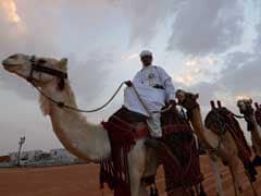Beauty In The Beasts: In Saudi Arabia's 'Miss Camel' Pageant Dromadaries Compete For $31 Million In Prizes