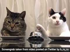 Daily Dose Of Aww: Watch These Cats Ring A Bell To Ask For Treats
