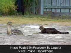 सांप फुफकारता रहा बिल्ली हिम्मत के साथ डटी रही, पुलिस ने शेयर की तस्वीरें