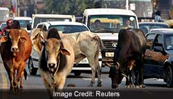 Gujarat Scientists Develop System To Help Cars Avoid Collisions With Cows