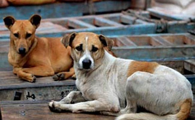 Mumbai Housing Society Slaps Rs 3.60 Lakh Fine For Feeding Stray Dogs