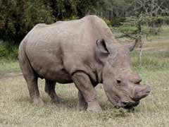 9 Rhinos Among 124 Animals Dead In Kaziranga Flood