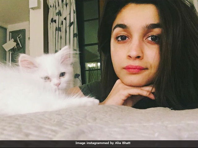 Alia Bhatt Or The Cat, Who Has More Attitude In Dabboo Ratnani-Shot Pic?