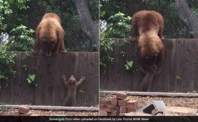 This Video Of A Mama Bear Helping Her Baby Bear Is The Cutest Thing Ever