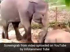 जब मुसीबत में फंसे नन्हे हाथी को नहीं मिला बचने का रास्ता तो अचानक आया एक दोस्त...Video Viral