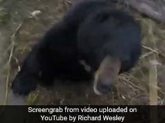 Man vs Animal: Bear Charges At Hunter In Scary Confrontation
