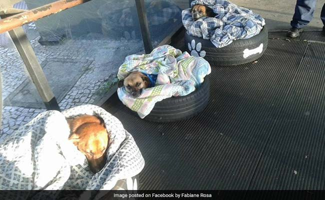 Homeless Dogs Cosy Up At Bus Stop, Welcomed With Food, Bed And Security