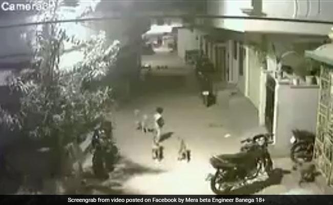 वीरान सड़क पर कुत्तों ने किया बच्चों पर अटैक, फिर... 24 घंटे में एक करोड़ से ज्यादा बार देखा गया वीडियो