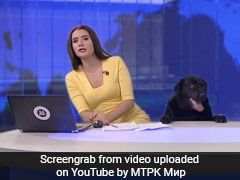 Dog Interrupts News Show For 15 Seconds Of Fame. Video Seen By 3 Million