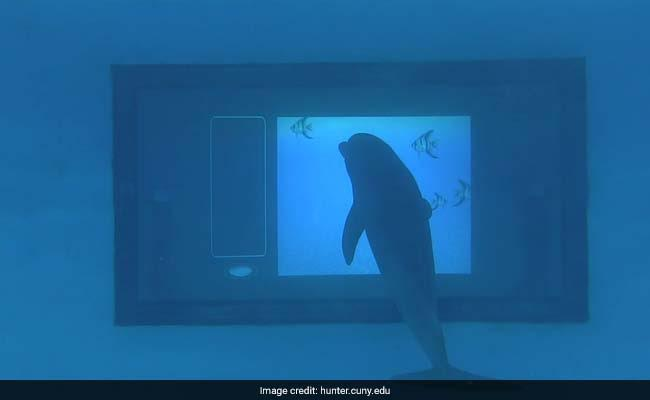 Scientists Develop Giant Underwater Touchscreen To Test Dolphin Intelligence