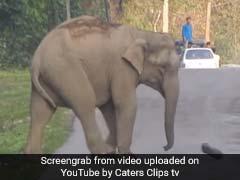 VIDEO: इस हाथी के शौक हैं नवाबी, पान दुकान देखते ही ठहर जाते हैं इसके कदम