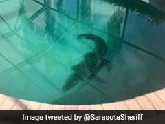 Family Finds Massive Alligator Chilling In Their Pool. Only In Florida