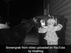 Video: रात में खाना ढूंढने निकला था काला भालू, 'भूत' देखकर हुआ रफू चक्कर!