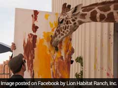 This Giraffe Prodigy Paints At A Lion Sanctuary. Would You Buy His Art?