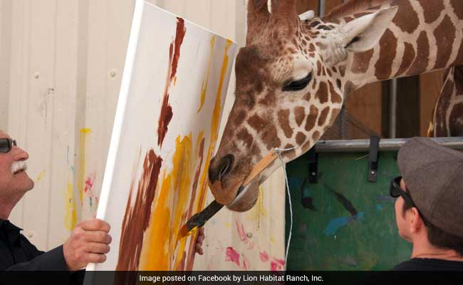 giraffe who paints