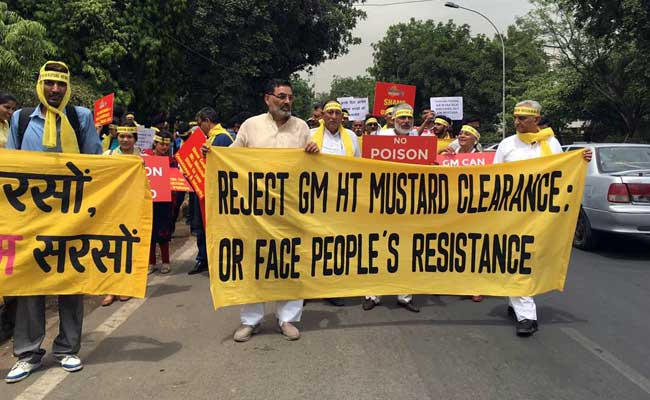 Activists Urge PM Narendra Modi To Reject Plea For Commercial Release Of GM Mustard