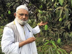 All About the 'Mango Man' Haji Kalimullah Khan Who Introduced NaMo Aam!