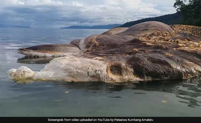 Giant sea creature that washed up on Indonesian beach identified by scientists