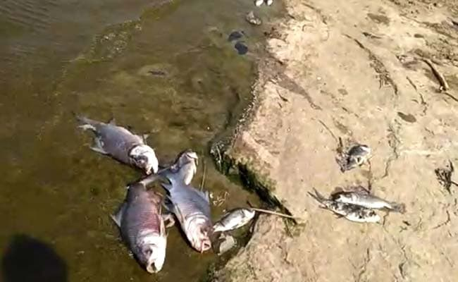 hyderabad lakes fish deaths