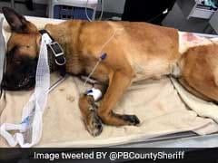 मोहाली : आपसी झगड़े में 31 कुत्तों पर फेंका तेजाब, एक की मौत ;12 गंभीर रूप से घायल