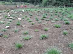 Ooty's Lawrence School Fights Drought Through A Grassland Restoration Mission