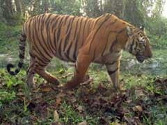 Exclusive: Inside India's Wild Reserve With Highest Tiger Density