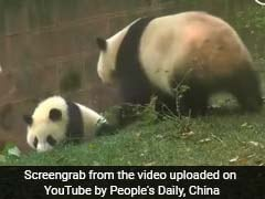 Panda Mom Puts An End To Baby Being Bullied In The Funniest Way