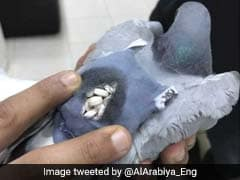 Flying High No More: Drug-Smuggling Pigeon Caught In Kuwait