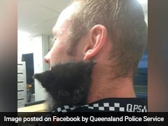 Kitten 'Wanted' For Stealing Officers' Hearts. 'Aww'dorable!