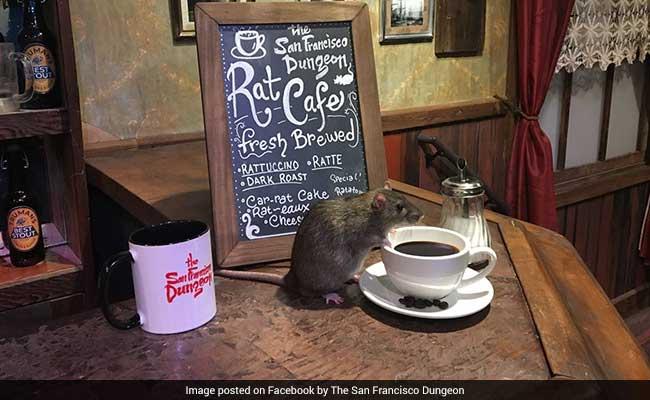 OMG: चूहों के लिए खुला कैफे, गरमा-गरम कॉफी की चुस्कियों के साथ करें उनसे दोस्ती